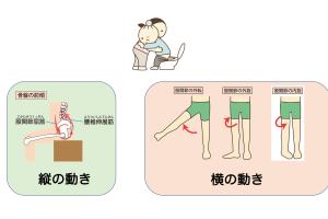 立ち上がり評価のすゝめ。骨盤以外に、股関節の横の動きを見るメリットをお伝えします。