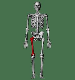 skeleton [ 1024 x 1024 Pixel ]