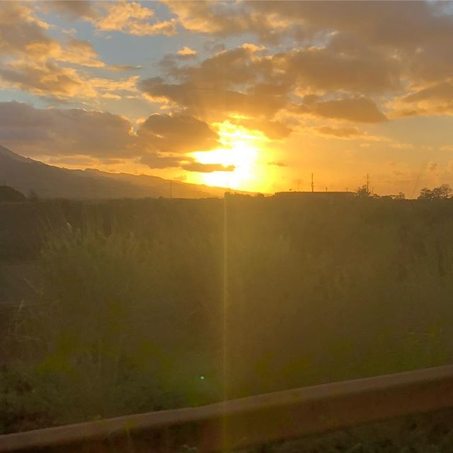 ハワイ・パイナップル畑の夕日