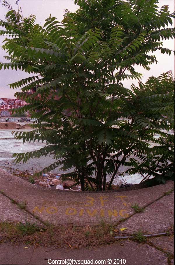 Ghetto tree grows in the corner.