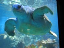 Turtle at NE Aquarium (2)