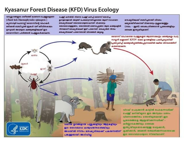 kyasanur-virus-ecology_1