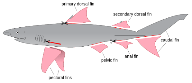 Shart Finning Diagram