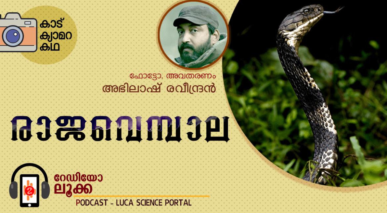 രാജവെമ്പാല – കാട്, ക്യാമറ, കഥ -RADIO LUCA