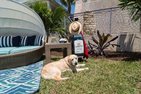 Bradenton custom pool builder insane pools custom water feature dogs