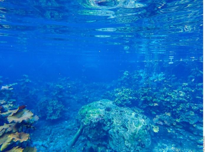 Padece Quintana Roo de estrés hídrico