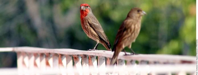 Afecta ruido reproduccion de aves