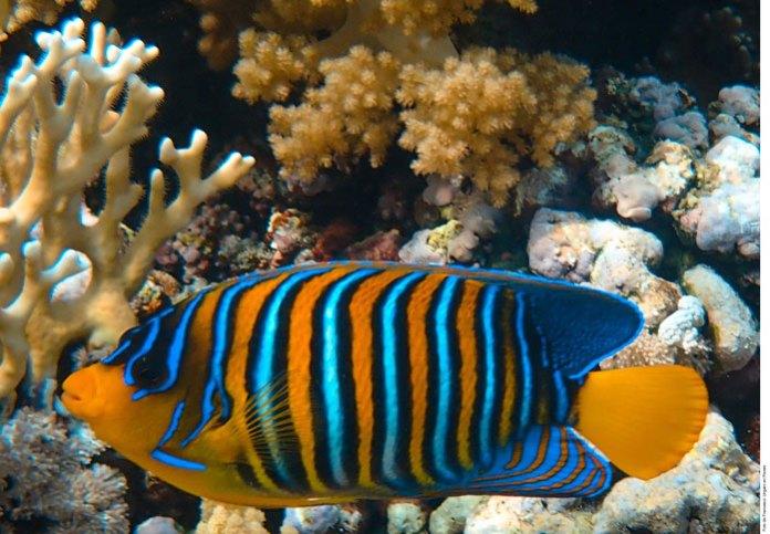 Corales en peligro: plásticos asfixian a arrecifes