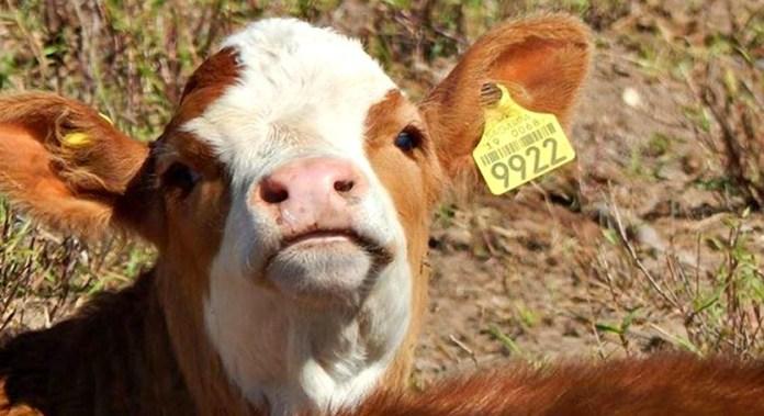 Procuran control en movilización animal y vegetal