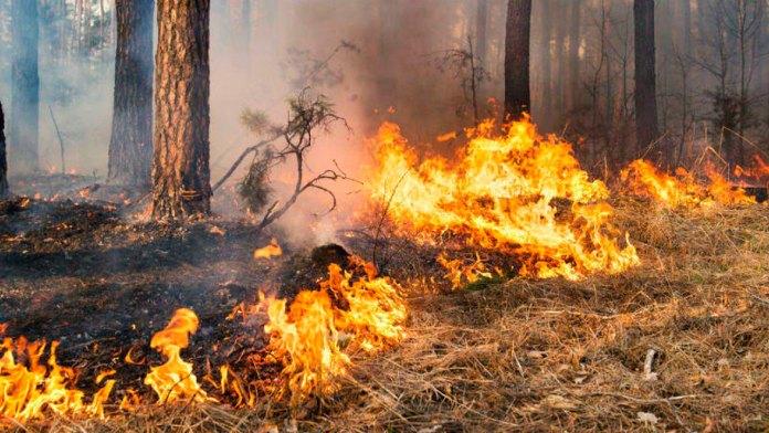 Reportan primeros incendios forestales