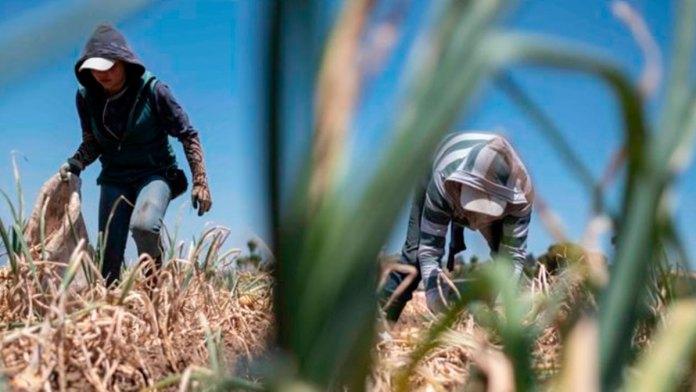 Destacan inversiones a sector agropecuario