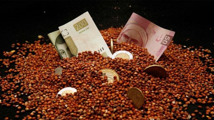 Disminuye en 8.6% cosecha de granos