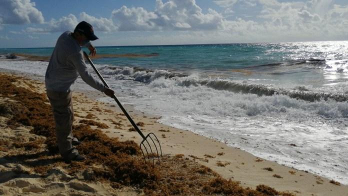 Crean empresarios frente antisargazo en la Riviera Maya