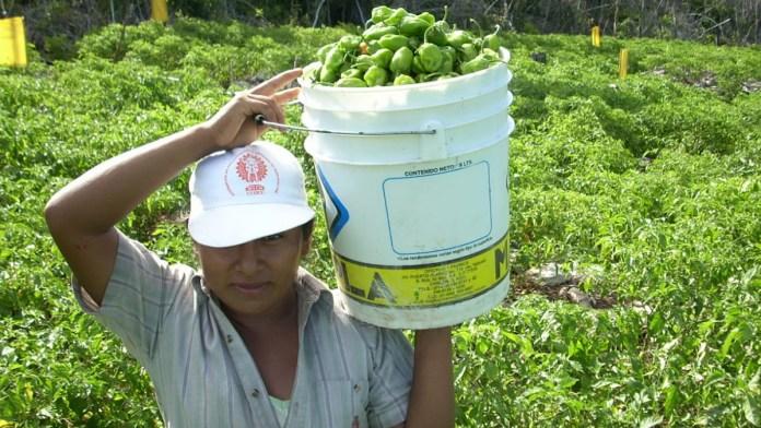 Darán impulso a productores en el sur del estado