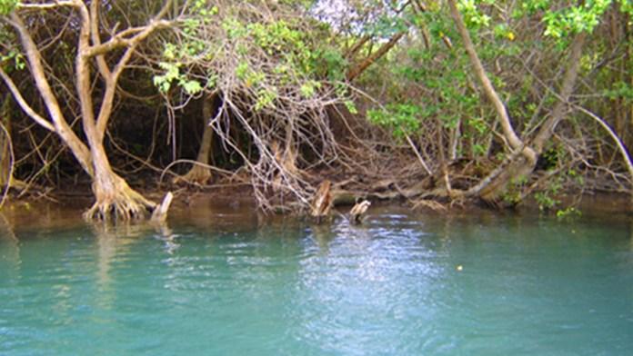Apoya Bezos restauración de manglares