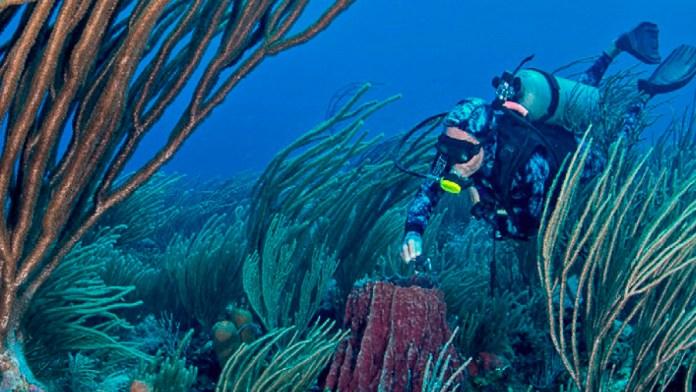 Al rescate científicos de Arrecife Alacranes