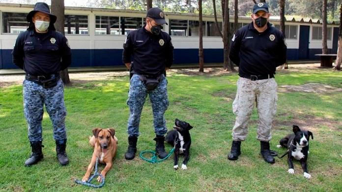 Se entrenan a diario... para rescatar animales