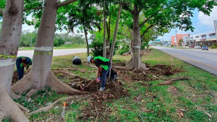 Mitigan impacto; reubican árboles