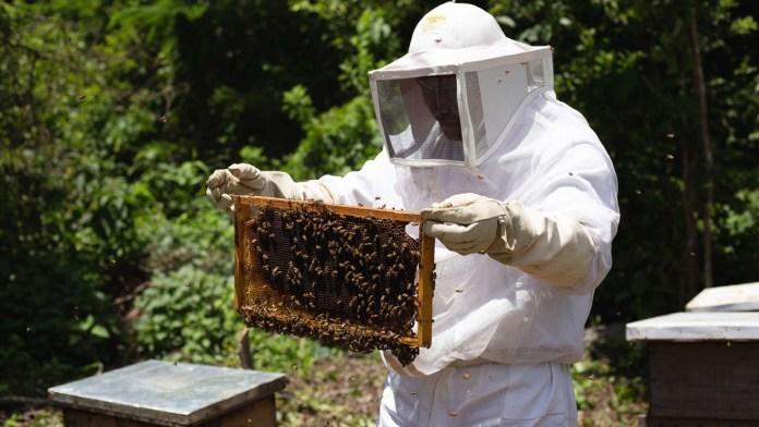 Mejora apicultura en el estado con programa piloto