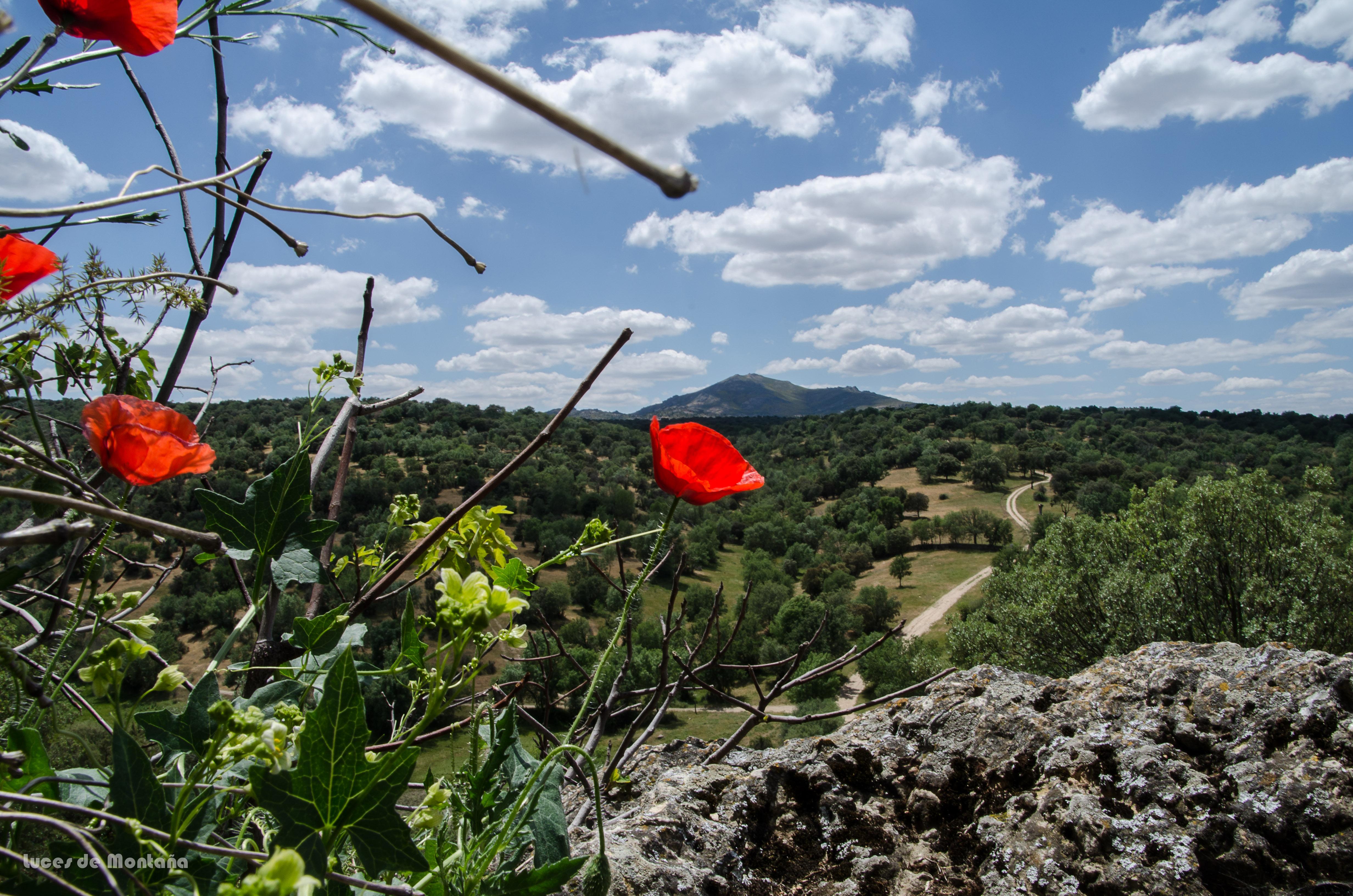 Cerro San Pedro desde Peñarubia