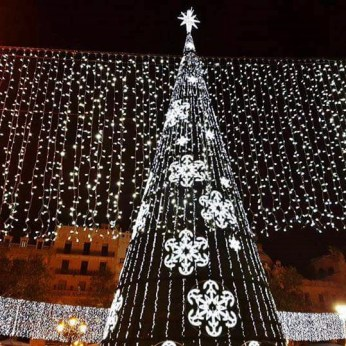 Árbol Plaza del Ayuntamiento