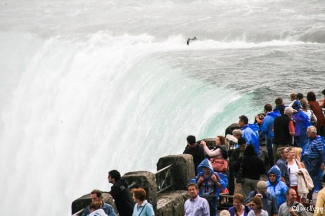 chutes_du_niagara11