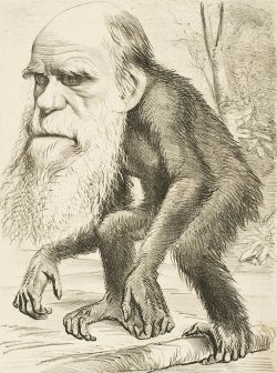 Editorial cartoon depicting Charles Darwin as an ape 1871