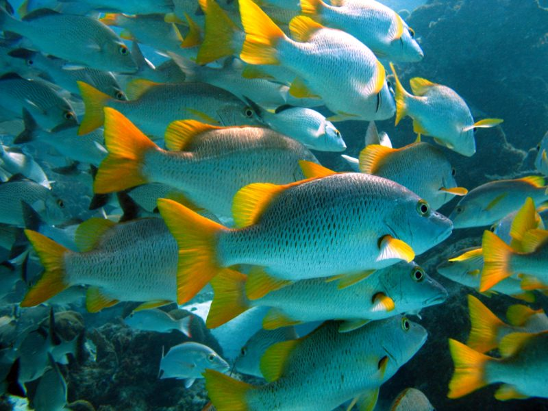 Lack of staffing, funds prevent Marine Protected Areas from realising full potential