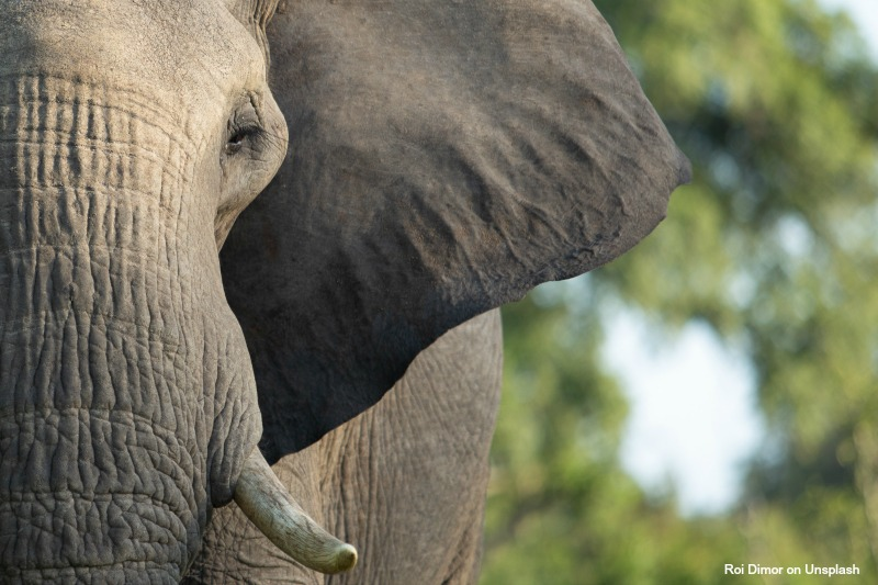 Community-led wildlife conservation – beyond hunting and tourism