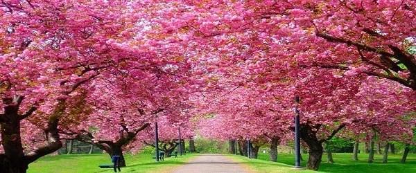 blossy12