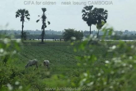 Luciano Usai - CIFA - Cambogia - img_5129-1