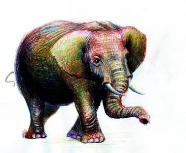 Elefantul - ilustratie de George Romila