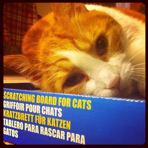 Enjoying a new scratching board and some catnip!