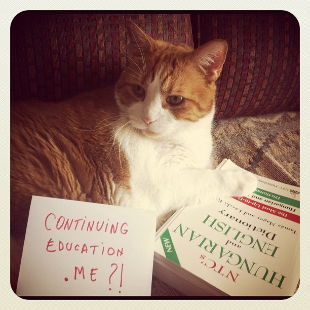 Hard to involve a cat in Continuing Education!