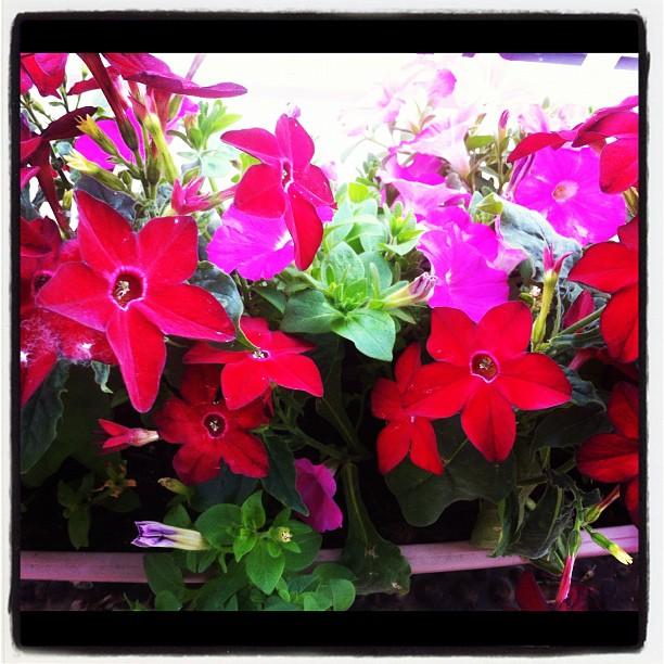My wife is very happy with her new balcony flowers!