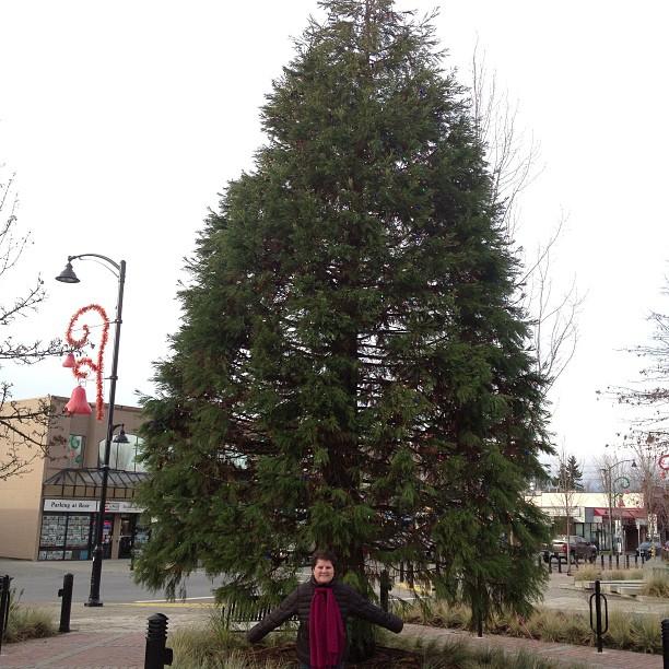 Christmas Tree in Maple Ridge Memorial Peace Park