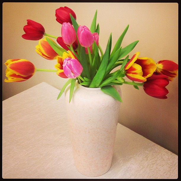 Tulips for my lovely wife