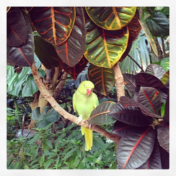 Beautiful Macaw, Butterfly Gardens, Victoria, BC