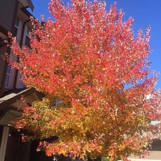 Beautiful autumn tree leaves