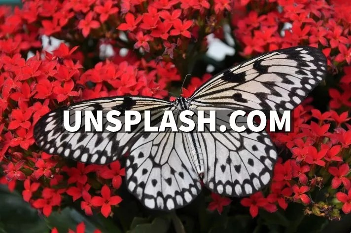 butterfly sitting on red flowers.