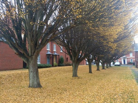 Heavitree autumn