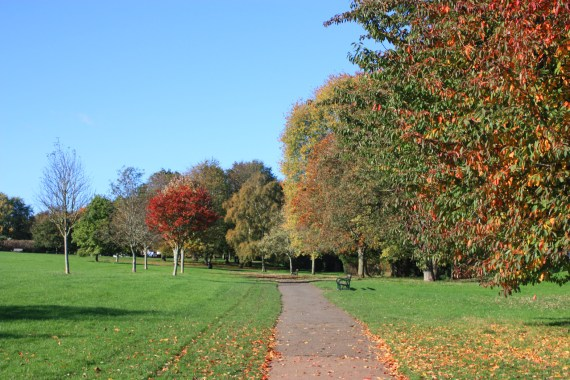 Heavitree park, I remember 'Nature Class' being spent there when I was in Primary School.