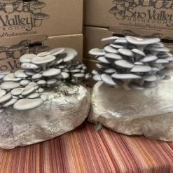 Organic mushroom kit