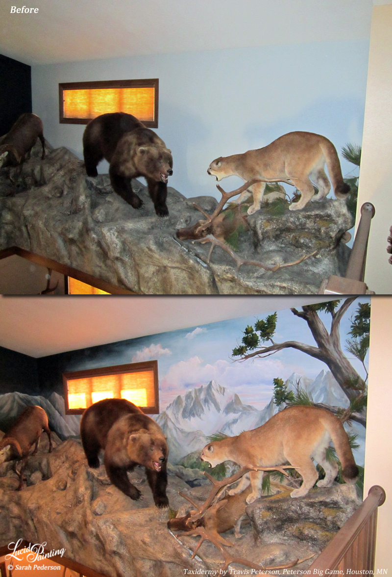 A mounted bear and mountain lion face off in the Rocky Mountains. With a plain wall behind them, they are impressive, but with mountains painted behind them, they really stand out and it draws even more attention to your animals. Mountains, trees, clouds, sunset. Any combination can be painted to suit your needs!