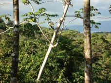 Costa Rica Osa Peninsula Toucan