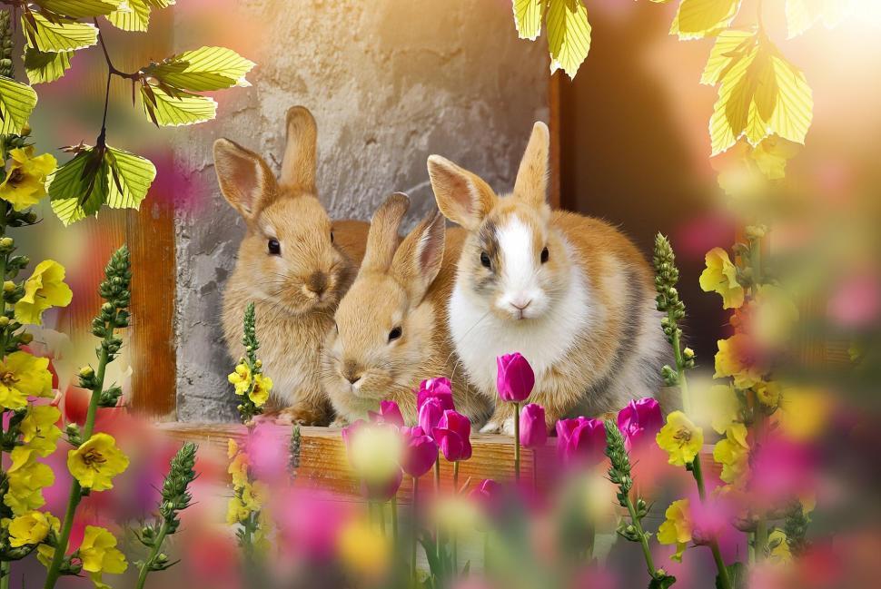 Velikonoční radovánky