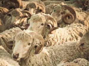 cowgirlblues yarn 03 - Le fil Cowgirlblues et mon pull Wild at Heart