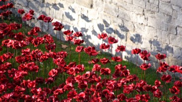 Lucinda Price Poppy Tower of London