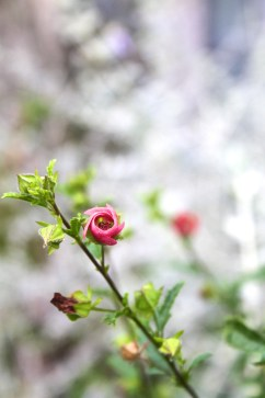 Floral lucinda price photography