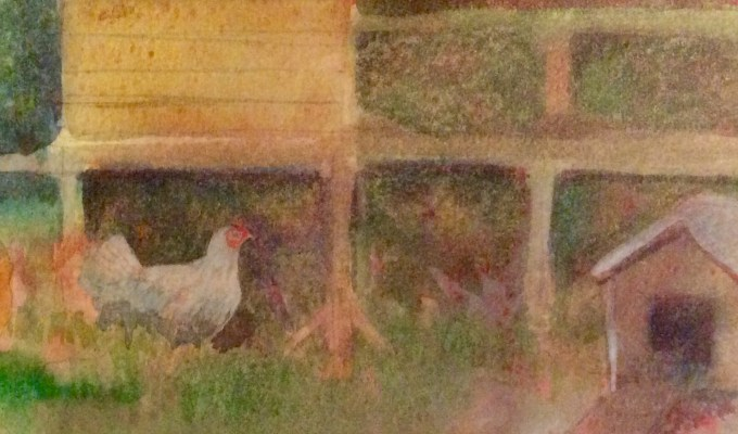 Hens at Dusk